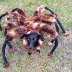 Video de Cão vestido de aranha gigante assusta pessoas e viraliza no Youtube